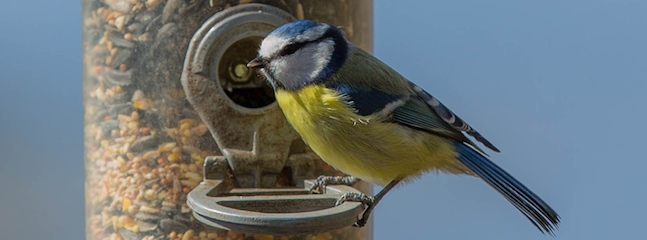 Win a Membership and Bird-Friendly Bundle!