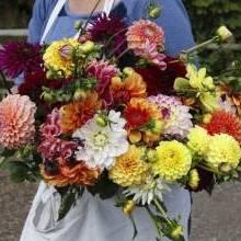 Florists and floristry near Bristol