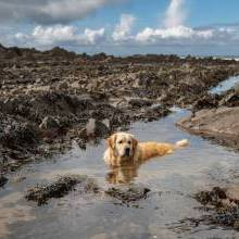 Top Dog Friendly Beaches on the South Coast