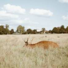 Best Places for Wildlife Spotting in London